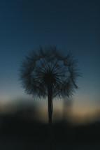 dandelion fluff silhouette
