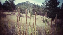 tall grasses and weeds growing on a mountainside