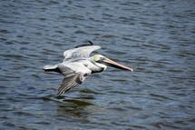 Crane in flight over blue water,