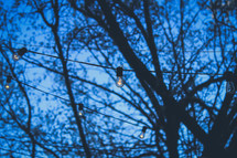 lights hanging from trees and a blue evening sky