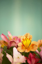 flowers in a vase closeup