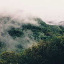 fog and clouds over a green mountain forest