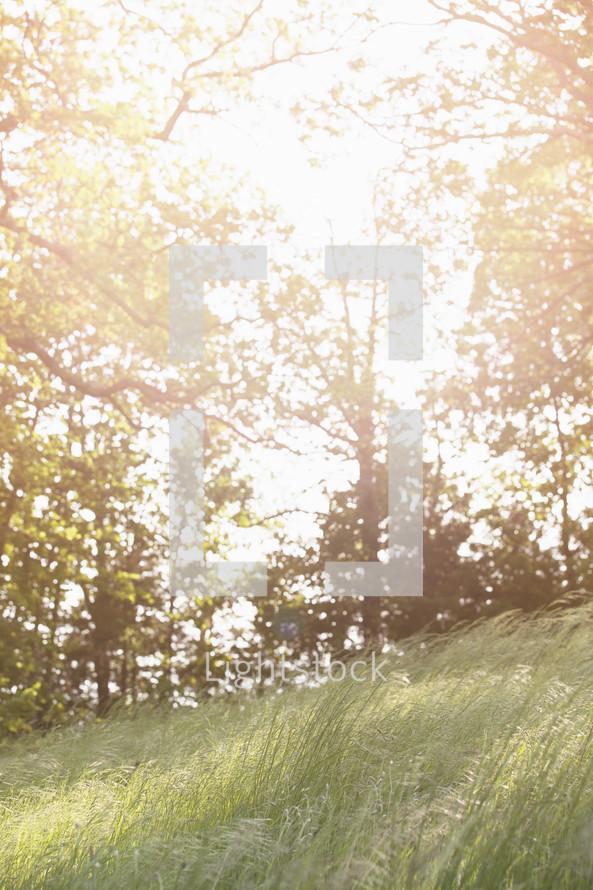 meadow in bright sunlight.