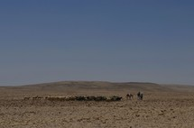 Bedouin shepherds with flock in the Negev wilderness