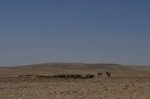 Bedouin shepherds with flock in the Negev wilderness