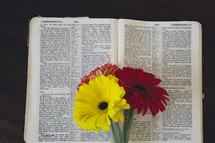 gerber daisies on the pages of a Bible