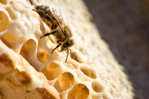 bee on a honeycomb