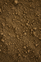 brown dirt background.