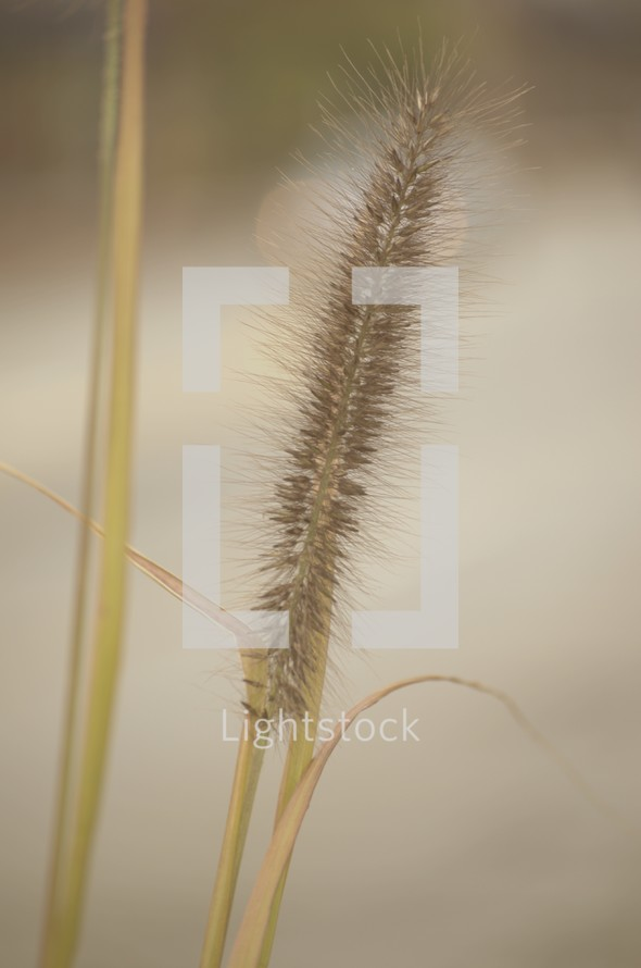 tops of grasses