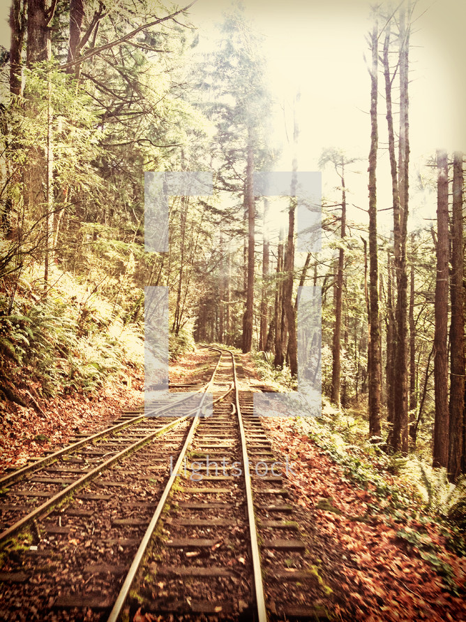 Railroad tracks through a forest of trees.