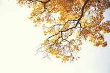 Tree branch with fall foliage.