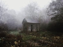 an abandoned shed in foggy woods
