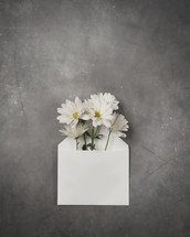 daisies in a white envelope