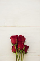 red long stem rose against a white background