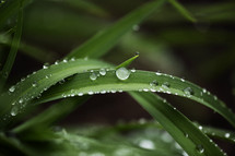 water droplets on blades of grass