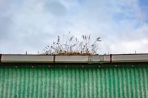 grass growing in a gutter