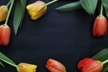 tulips on black