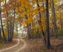 dirt road through a forest in the fall