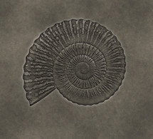 fossil in stone