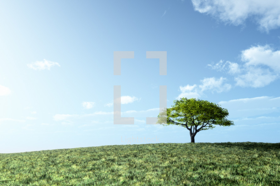 lone tree on a grassy hill