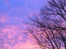 winter trees and purple and pink sky at sunset