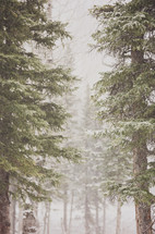 mountain trees in a snow fall