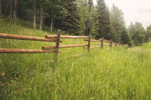 tall grass and fence in a field