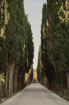 tree lined driveway in Italy