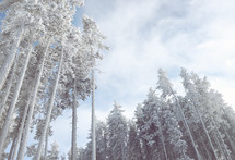 breathtaking frosted woods