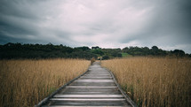 boardwalk over a marsh