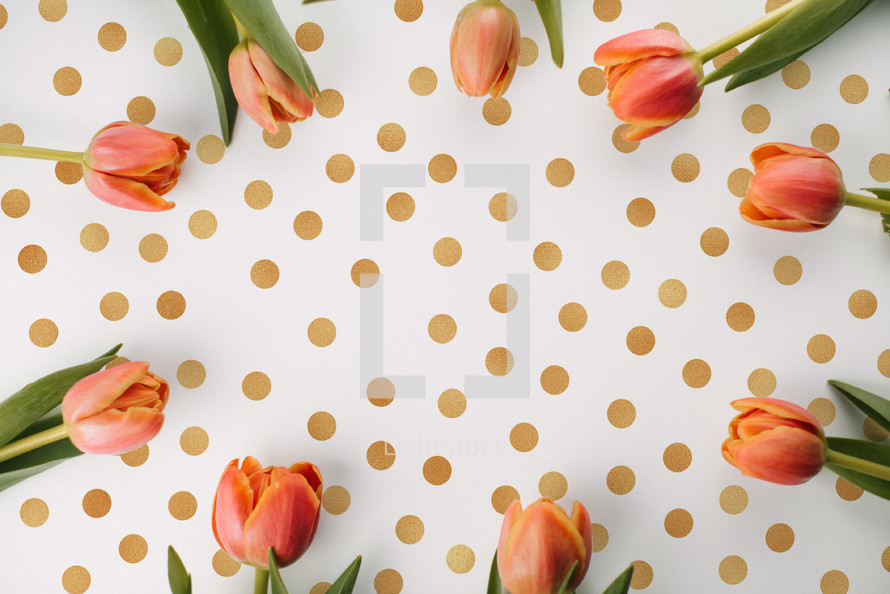 Tulips on a polka dotted background