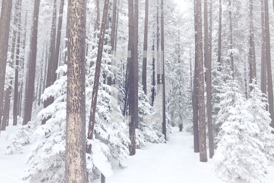 winter pathway through frosted and foggy forest