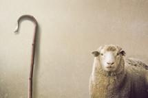 shepherd staff and sheep
