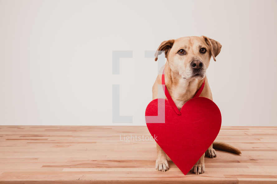 a dog with a paper heart around its neck