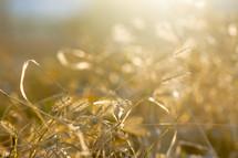 warm sunlight on brown vegetation