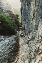 plants growing between rocks along a mountainside