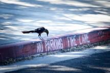 a bird next to a no parking fire lane marking on a curb