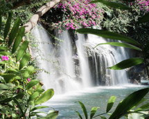waterfall and pink flowers