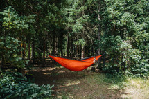 a hammock between trees in a forest