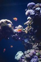 Orange fish swimming in ocean water