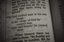 Genesis scripture verse close up