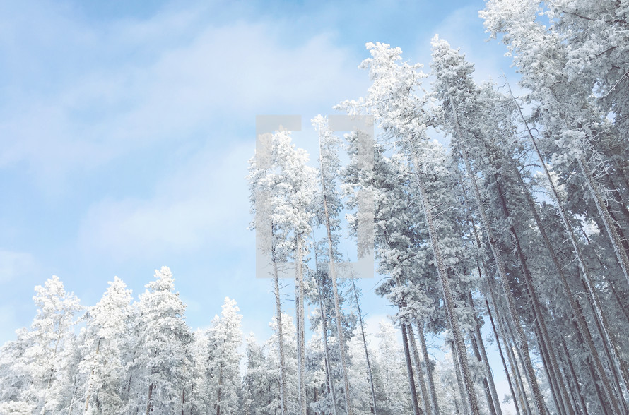 white frosted woods with blue sky