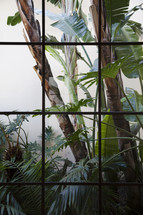 tropical plants out a window