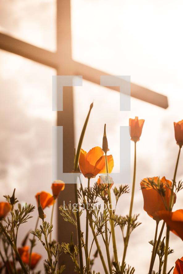 flowers growing under a cross glowing in sunlight