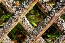 lichen and moss on lattice