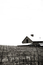Barn in a pasture vineyard winter