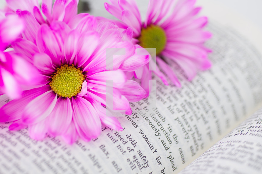 Pink flowers on an open Bible.
