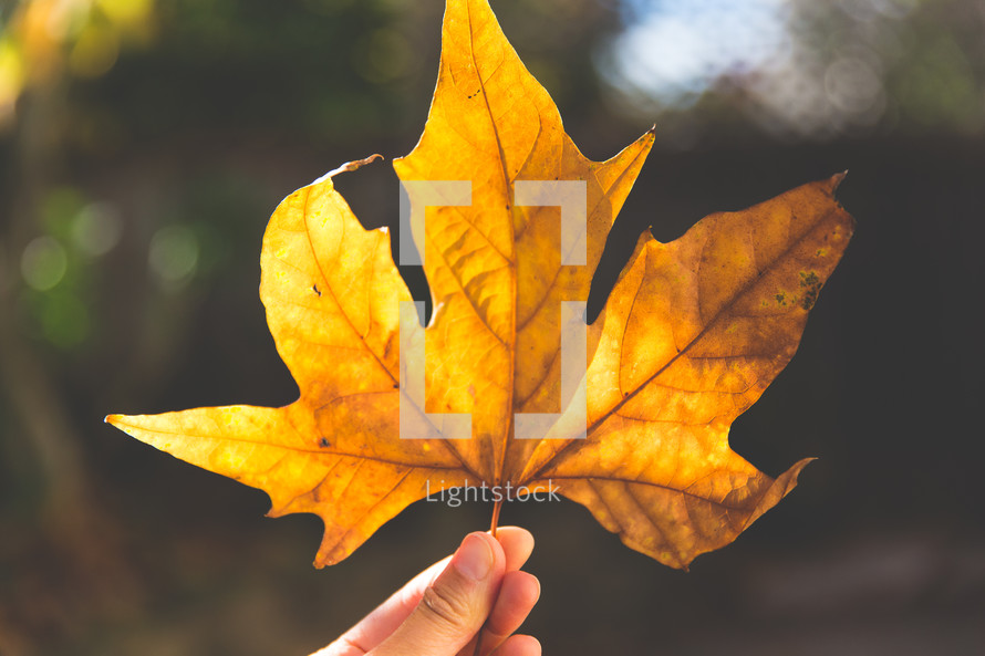 person holding up a fall leaf