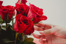 a woman touching red roses