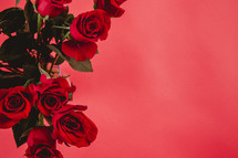 Red roses on a red background.